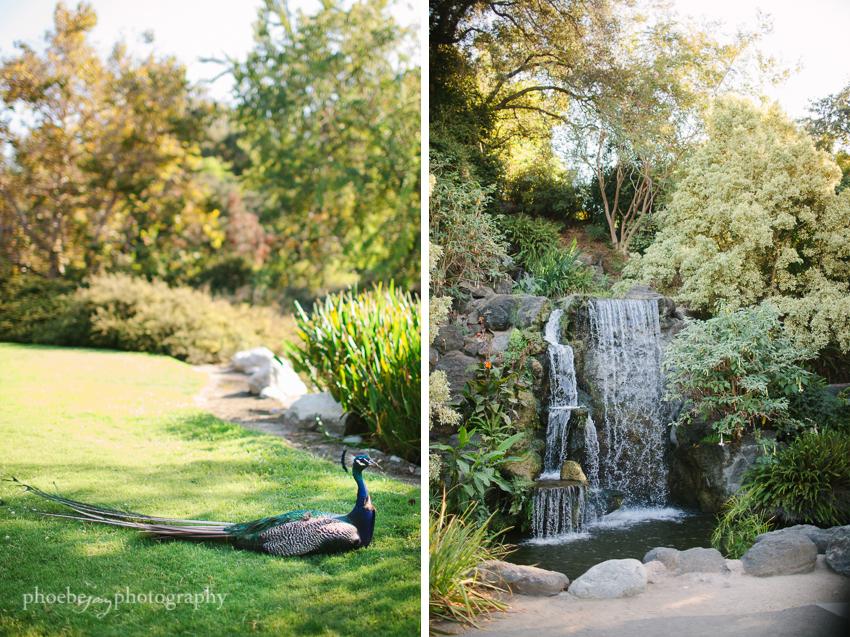 Arboretum wedding photography - Arcadia --7.JPG