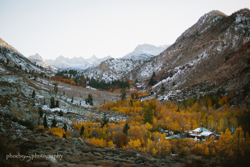 Eastern Sierra - fall foliage-5 - Bishop.JPG