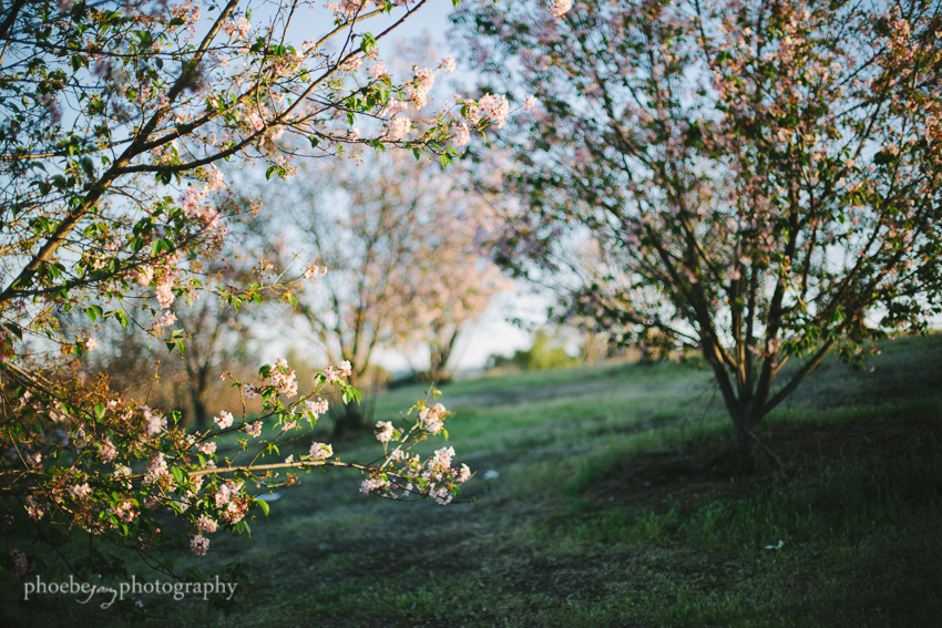 Lake Balboa - Phoebe Joy Photography -cherry blossoms -2.jpg