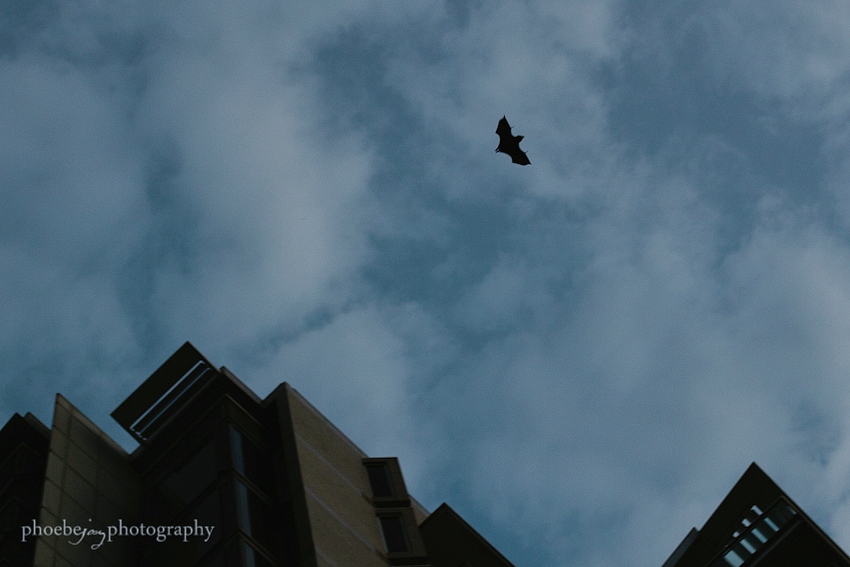 Phoebe Joy Photography - Sydney - Australia - 4 - Flying fox.jpg