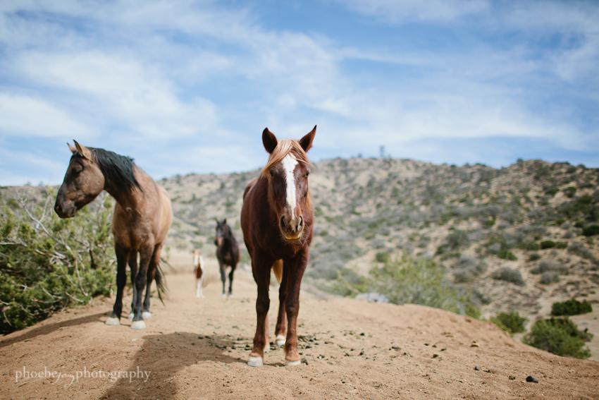 Phoebe Joy Photography - horses 1.jpg